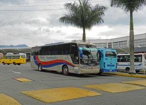 Bus Flota Occidental